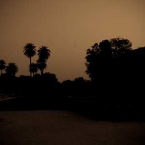 Dusk & Birdsong, From 'Rajasthan', Steven Lee 2009